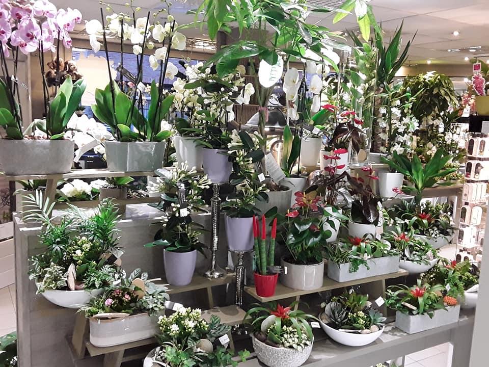 Bloemen Reynaert Oudenaarde planten