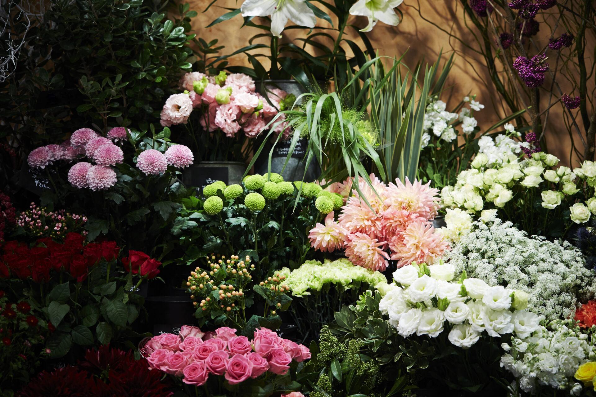 Bloemen Reynaert bloemen en planten